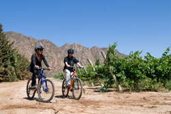 Enjoy! - Bicycle tours through the vineyards